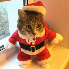 Christmas Cat Clothes Costume Clothes For Cats New Year Puppy Outfit Pet Cat Clothes For Chihuahua Winter Warm Pet Clothes 20 Online Pet Supplies, Cat Supplies, Christmas Animals, Christmas Cats, Yorkies, Cat Christmas Outfit, Yorkshire, Puppy Clothes, Cat Accessories