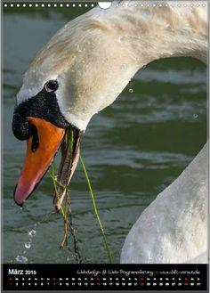 Home - motiv-digital Digital, Animals, Swans, Horseback Riding, Animales, Animaux, Animal, Animais
