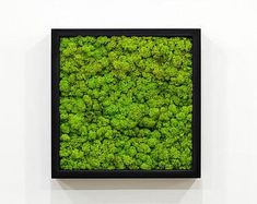 Check out our moss wall art selection for the very best in unique or custom, handmade pieces from our wall décor shops. Moss Wall Art, Moss Art, Green Wall Art, Green Art, Wedding Wall Decorations, Organic Art, Wall Boxes, Plant Art, Office Wall Art