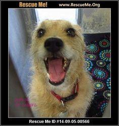 - Baldwin Park - CA Rescue Animals
