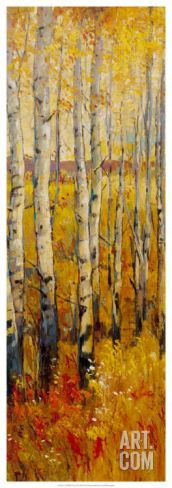 Vivid Birch Forest II Art Print by Tim O'toole at Art.com
