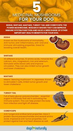 Medicinal Mushrooms For Dogs: Multi-Dimensional Healing. Mushrooms are a great cancer fighter Herbal Remedies, Health Remedies, Mushroom Tea, Mushroom Kits, Mushroom Benefits, Growing Mushrooms, Natural Healing, Healing Herbs, Mushrooms