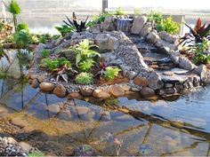 So going to make this in my backyard