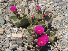 Desert Plants | Keep It Cool: What Desert Plants Can Teach Us About Climate Change