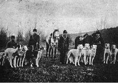 Russian Hunt with Borzoi. Circa 1910  From novgoroborzoi.com/history.htm