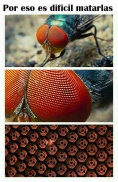 Why flies are so hard to kill(Uchiha blood). Boruto, Naruto Shippuden Sasuke, Gaara, Naruto Comic, Naruto Art, Art Vampire, Vampire Knight, Japon Illustration, Funny Naruto Memes