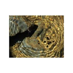 ❤ liked on Polyvore featuring backgrounds, gold, spiral and textures