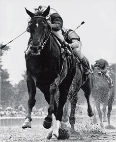 Ruffian, arguably THE best race horse that ever lived.  Never headed, never beat, died in a match race with a colt while in the lead.