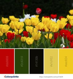 Color Palette Ideas from Flower Plant Flowering Image Colour Pallete, Color Combinations, Color Palettes, Colorful Flowers, Wild Flowers, Tulip Colors, Find Color, Flower Images, Color Shades