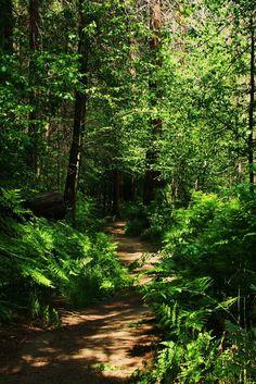 Forest path in Yosemite by galleleo
