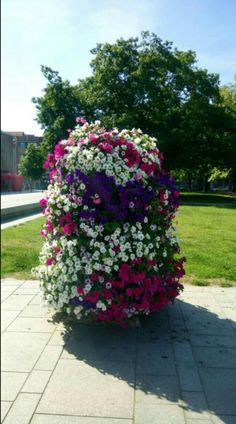 Grow beautiful flowers fast. Fast Growing Flowers, Fast Flowers, Flowers Gif, Types Of Flowers, Summer Flowers, Flower Containers, Marigold Flower, Growing Seeds, Large Plants