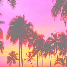 orange, palm trees, and pink afbeelding