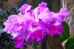 Orchid at Longwood Gardens by Steve_Logan, via Flickr
