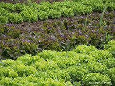producao-de-hortalicas-tecnologia-e-treinamento