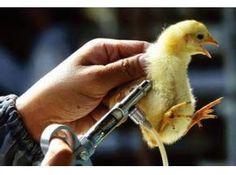 Japan Avian Influenza Vaccines Market Report 2016
