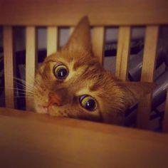 "catsbeaversandducks:  ""Is dinner ready yet, mama?"" Photo by ©Rudomi.pl"