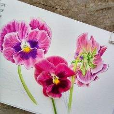 Watercolor Projects, Watercolor And Ink, Watercolor Flowers, Watercolor Paintings, Watercolors, Botanical Drawings, Botanical Prints, Oil Pastel Colours, Unusual Art