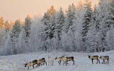 Lapland (Finland)