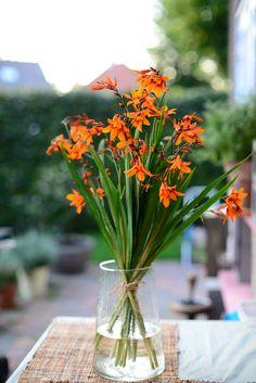 Crocosmia (Montbretia) harvest Crocosmia, Harvest, Table Decorations, Garden, Plants, Furniture, Home Decor, Garten, Decoration Home
