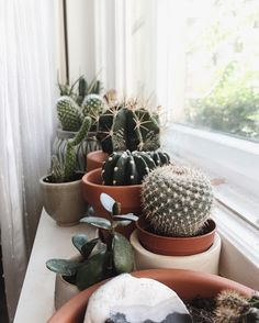 these are just too cute | succulent, cactus, plants, plant lady, window, home inspiration, house, living space, room, scandinavian, nordic, inviting, style, comfy, minimalist, minimalism, minimal, simplistic, simple, modern, contemporary, classic, classy, chic, girly, fun, clean aesthetic, bright, white, pursue pretty, style, neutral color palette, inspiration, inspirational, diy ideas, fresh, stylish, 2017, sophisticated