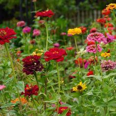 Garden Herb Garden Design, Lawn And Garden, Growing Marigolds, Vertical Garden Plants, Rosemary Plant, Garden Stand, How To Lighten Hair, Parts Of A Plant, Growing Seeds