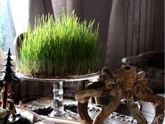 french christmas tradition of feast of St Barbara on Dec. 4 Growing wheat grass for the creche crib on Christmas eve. Happy Holidays, Christmas Holidays, Christmas Decorations, Table Decorations, Winter Holiday, White Christmas, Holiday Fun, Holiday Ideas, Christmas Ideas