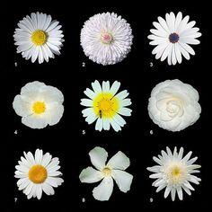 http://www.corespirit.com/trials-bach-flower-remedies/ Trials With Bach Flower Remedies