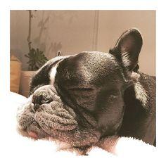 #boxer #Bulldog #boxergram #boxersoninstagram #dog #dogg #dogs #doggie #犬バカ部#l4l#french #like4like#pet #puppylove #poodle #pendleton #pretty#愛犬#犬#ボクサー#フレンチブルドッグ#ブルドッグ#フレブル#トイプードル#トイプー#lol#f4f#cute#smile#instagood