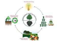 International Agrichar Initiative (IAI)