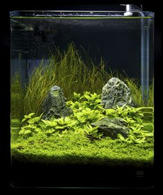 Nano contestants at the Art of the Planted Aquarium, Hannover 2011 Aquascaping, Aquarium Aquascape, Betta Aquarium, Planted Aquarium, Aquarium Landscape, Nature Aquarium, Home Aquarium, Aquarium Ideas, Aquarium Design