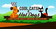 This Summer Keep Your Cat From Overheating - http://www.mustlovecats.info/this-summer-keep-your-cat-from-overheating/