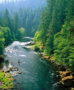 Hope you make your way to a river this weekend! Pictured: Oregon's North Umpqua River. Trout Fishing Tips, Fishing Tricks, Fishing Basics, Salmon Fishing, Fishing Techniques, Steamboats, Best Fishing, Fishing 101, Sport Fishing