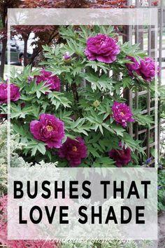 Shade Garden Plants, Garden Shrubs, Garden Trees, Garden Bed, Flowering Shade Plants, Perennial Garden Plans, Cottage Garden Plants, Garden Pests, Fruit Garden