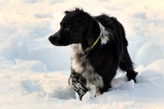 Great puppy training tips for border collies. Photos by Heather Milward.