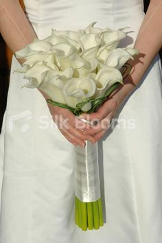 Shop Gorgeous, Classic Hand Tied Ivory Calla Lily Bridal Bouquet online from Silk Blooms at just £ It is an online artificial wedding flowers store in UK. Gerbera Daisy Wedding, Calla Lily Bridal Bouquet, Calla Lily Wedding, Diy Wedding Bouquet, Bridesmaid Bouquet, Bridal Bouquets, Wedding Flower Photos, Wedding Flowers, Calla Lilies