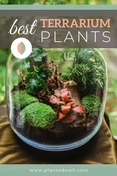 We listed the different types of best terrarium plants to add on your mini garden at home: from small, low-light ready, small to water terrarium plants, we've got you covered. Additionally, a list of terrarium types and a DIY instruction await in our blog so you never run out of inspiration in your mini DIY project. Best Terrarium Plants, Buy Terrarium, Large Terrarium, Water Terrarium, Farmhouse Ideas, Modern Farmhouse, Fairy Garden Plants, Jade Plants, Spider Plants