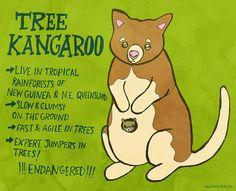 365 days of animals 297 tree kangaroo peninkdigital