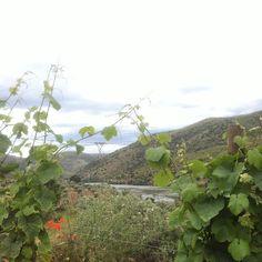 Este excesso de natureza! #douro #castelomelhor #fozcôa by colectivodemelhoramentos