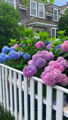 Beautiful Flowers Garden, Beautiful Roses, Pretty Flowers, Beautiful Gardens, Hydrangea Landscaping, Garden Landscaping, Hydrangea Garden, Hydrangeas, Cottage Garden Design