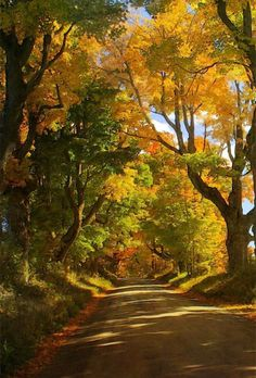 Beautiful world · let's walk this road scenery pictures, nature pictures, forest path, Autumn Scenery, Autumn Trees, Wallpaper Inspiration, Photographie Portrait Inspiration, Landscape Photography, Photography Tips, Fall Nature Photography, Travel Photography, Nature Wallpaper