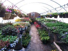 Viola Nursery and Greenhouse Viola, MN