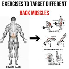 Bodybuilding muscle workout using different workout techniques like uni-set, multi-set, pyramid routines, super breathing sets and much more. Choose an effective workout that suits your lifestyle. Gym Back Workout, Good Back Workouts, Lower Back Exercises, Gym Workout Tips, Chest Workouts, Fun Workouts, Workout Men, Back Workout Bodybuilding, Fit Girl