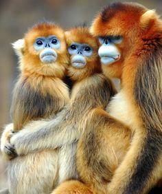 Fotos increíbles de animales