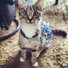 Present #cat #kitten #cute #present #gift