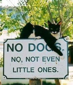 A cat wrote this sign...