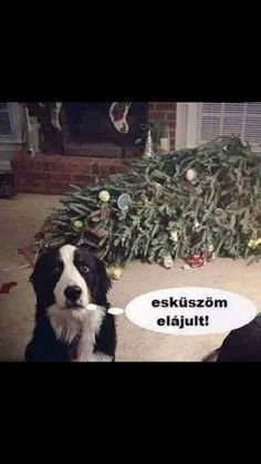 Hiszek neked picike!!!😂😂😂 #Zita #vicc Cute Jokes, Funny Jokes, Animals And Pets, Funny Animals, Comedy Memes, Just For Laughs, Animal Memes, Really Funny, Funny Moments
