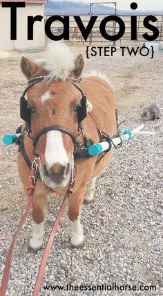 draft horse harness diagram for pinterest equine pinterest rh pinterest com Best Horse for Harness Work Work Horse Harness