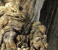 Chat dans un arbre brun