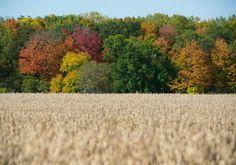 Iowa fall