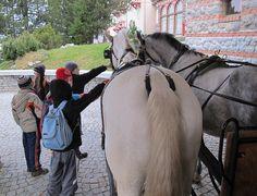 Die Pferde, ein Magnet für Kinder. Foto: Doris Horses, Animals, Pictures, Kids Magnets, Animales, Animaux, Animal, Animais, Horse